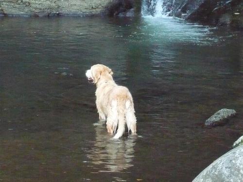 川の中でブータン.jpg