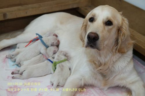 エマと赤ちゃん.jpg