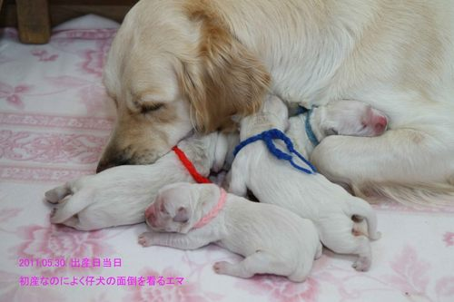 エマと赤ちゃん2.jpg