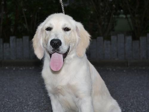 ステファン子犬b-1.JPG