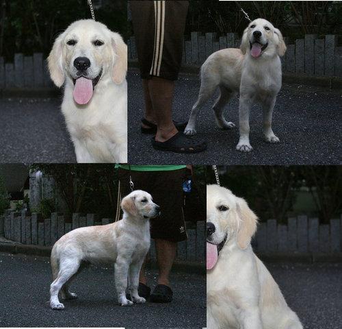 ステファン子犬b記事用.jpg