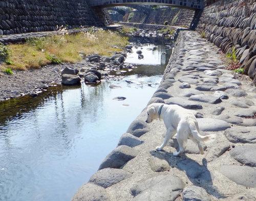 中島川2.jpg