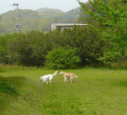 河川敷公園2.jpg