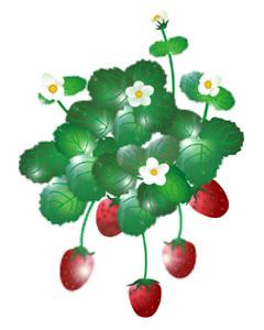 mugenkatei.fem.jp Wild_Strawberry-5.jpg