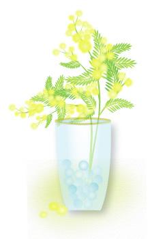 mugenkatei.fem.jp mimoza-1.jpg